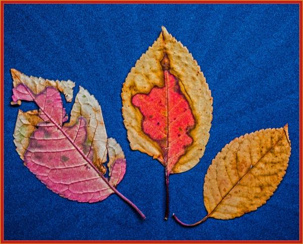 autumnal shades... by estonian