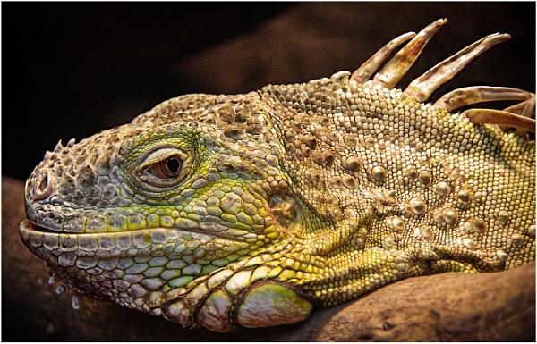 Lizard Smile by sueriley