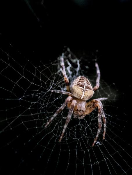 Spider from the Dark