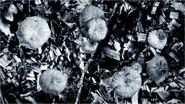 Mushroom mystique by fredsphotos