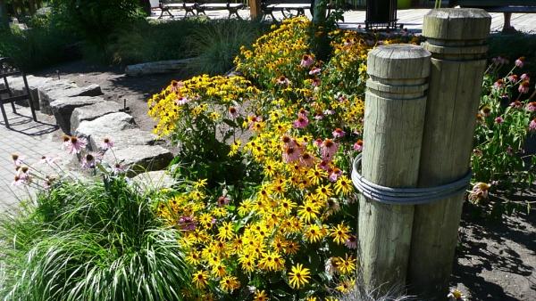 Flowerbed on Riverside walk by MentorRon