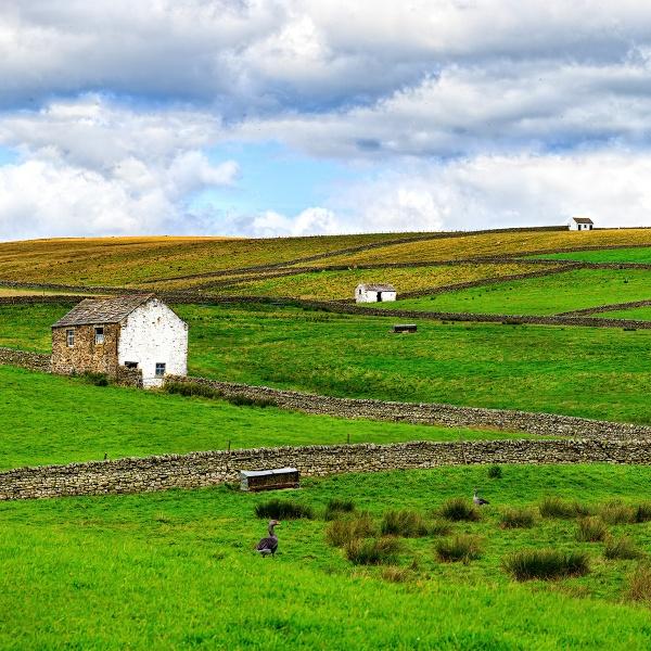 Rural Teesdale by Muggeridge