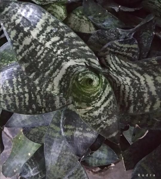 Camo pattern printed leaf by Rudranath