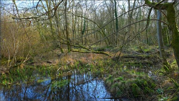 Stanton Parks great wood. by niknakpaddywhack