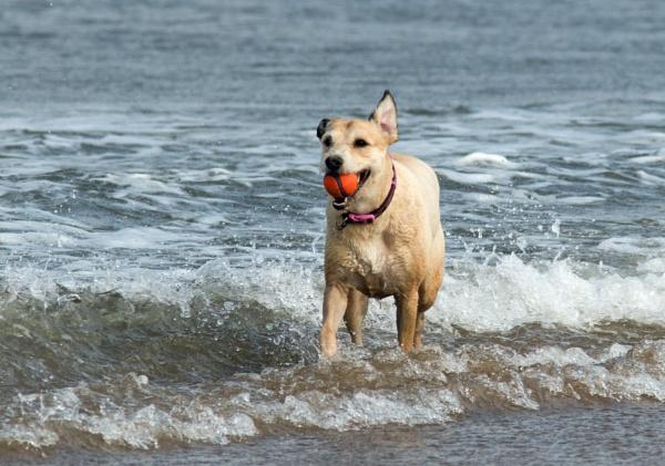 Dog with ball by oldgreyheron