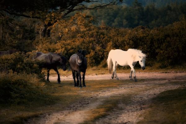 Wandering by Alfie_P