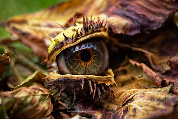 Eye eye by SurreyHillsMan