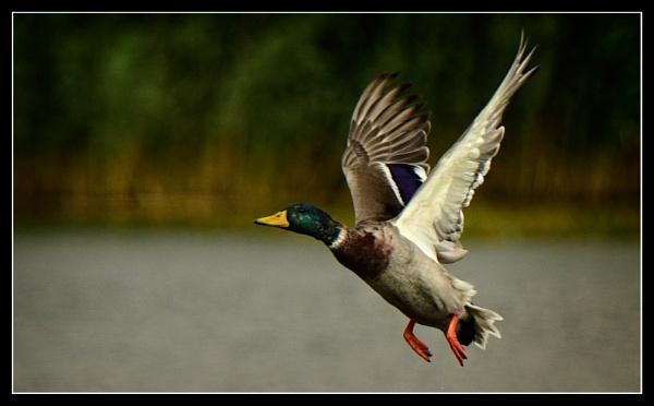 in flight by ossca