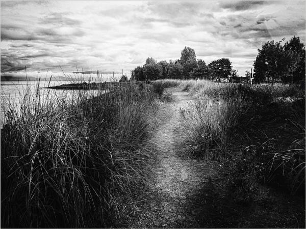 Along the Path by Daisymaye