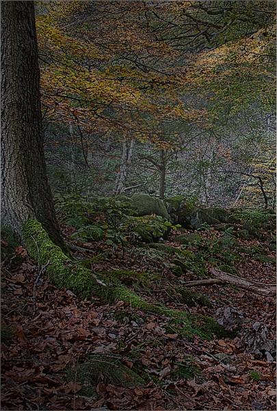 Padley Gorge by Gavin_Duxbury