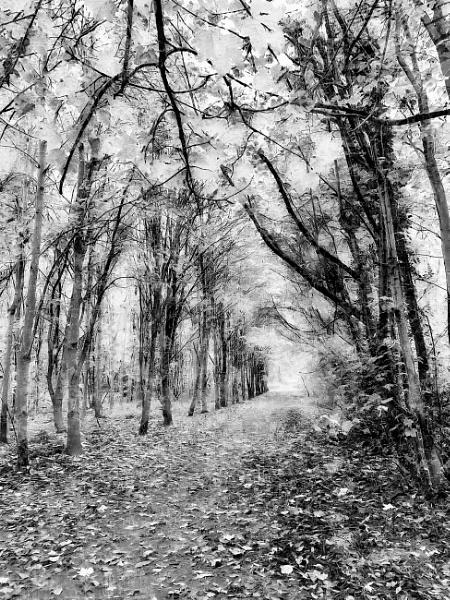 Autumn Stroll by RLF
