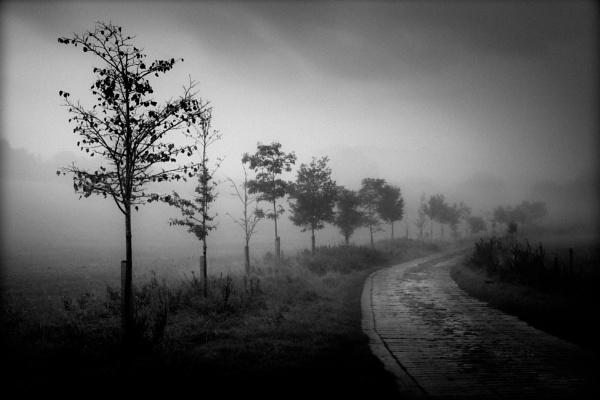 Misty Morn by true