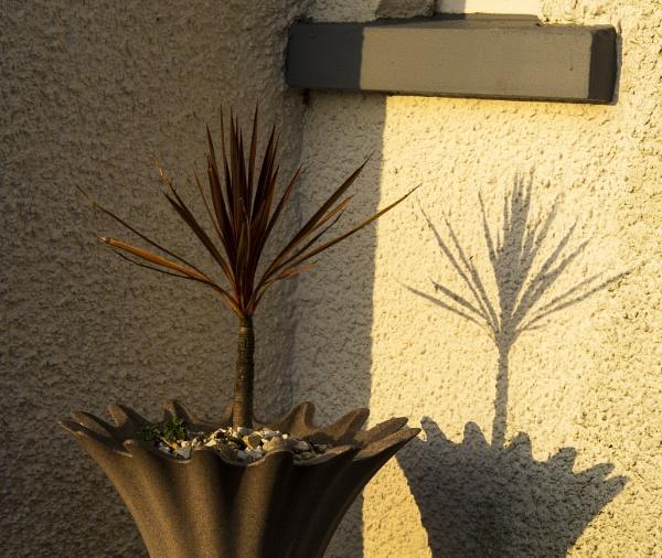 Dawn Shadows by Irishkate