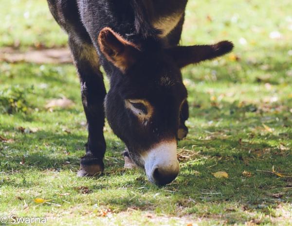 Wild Donkey... by Swarnadip
