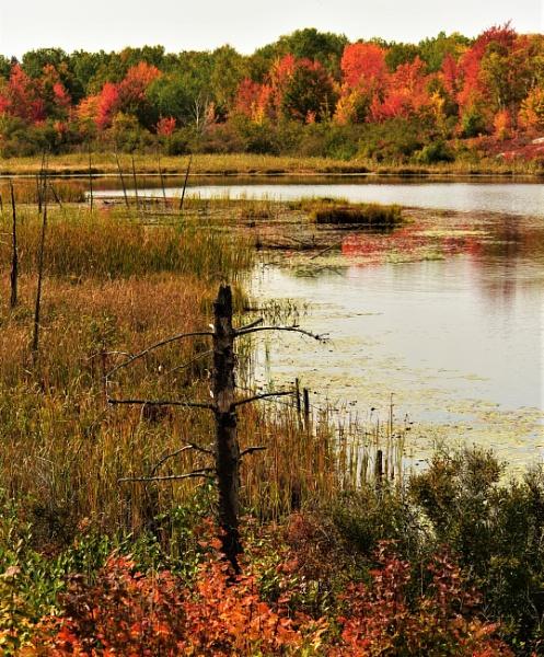 Autumn in Ontario by djh698