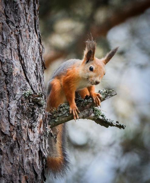 Squirrels. by Jukka