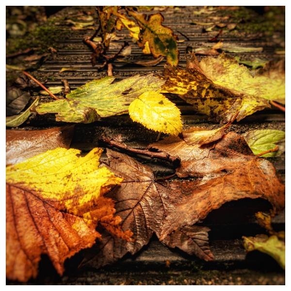 Autumn Leafs by happysnapper