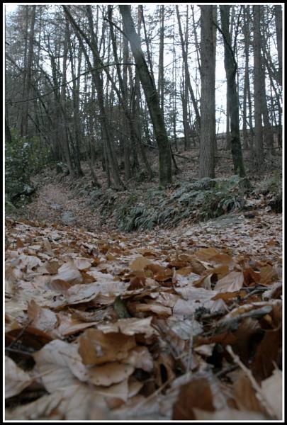 winter walk by gunner44