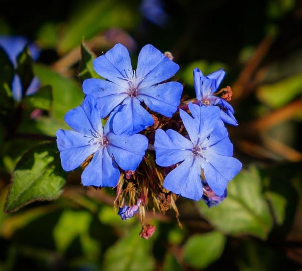 Blue by Nikonuser1