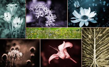 Nature in Tones