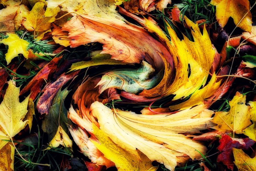 """""""Autumn on the Move""""."""
