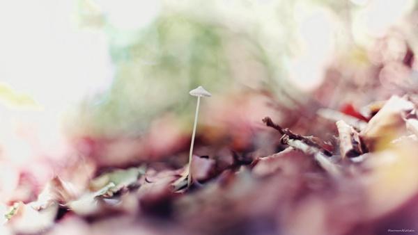 Purple Autumn by HarmanNielsen