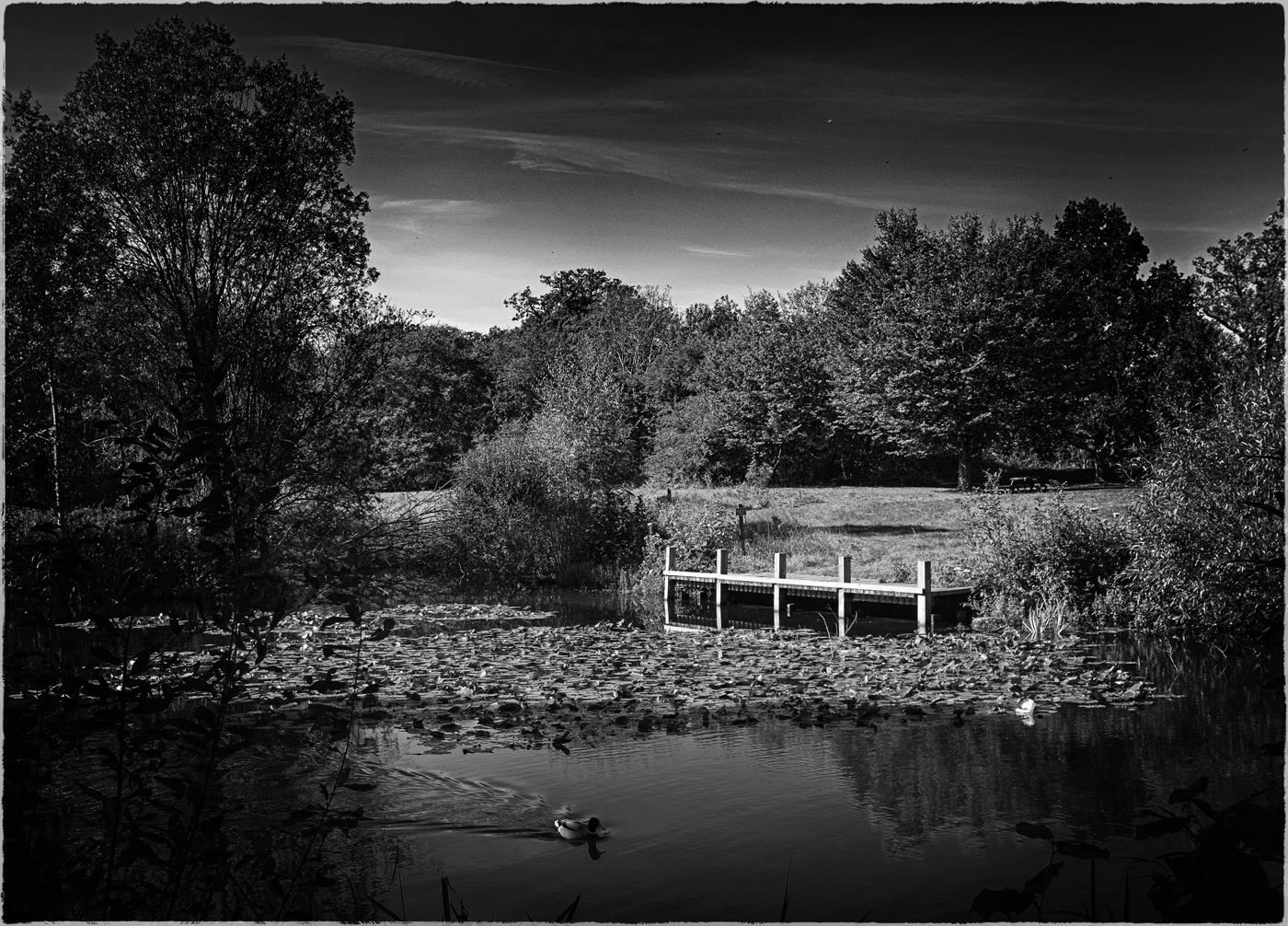 """""""Lakeside View"""""""