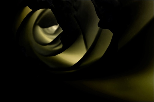 Rose Abstract by loves2travel