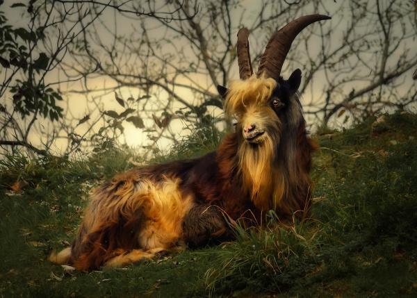 Big Billy Goat Gruff by Pricey