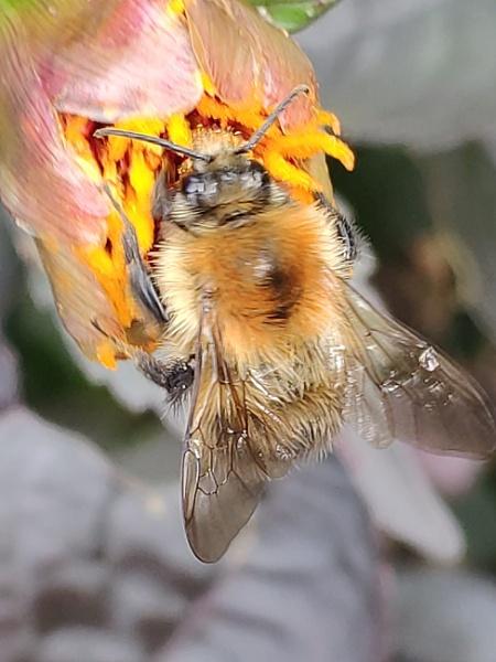 Beesy In It! by Fredjax