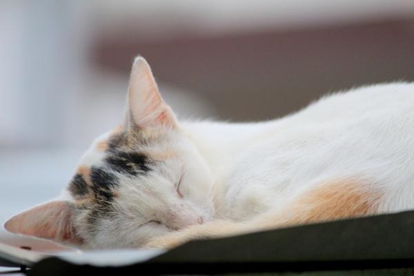 Cat by Bhuyan