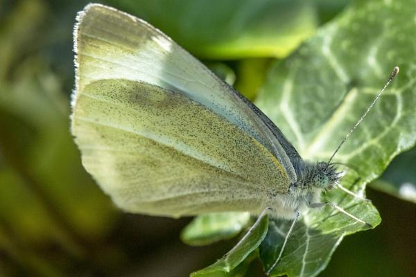 Butterfly by michaelo