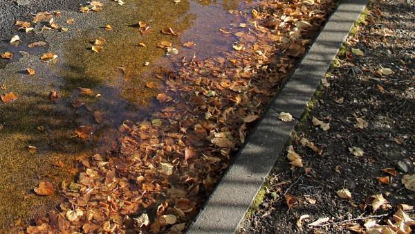 Fallen leaves by helenlinda