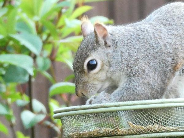 Feeding Squirrel by Peejayem