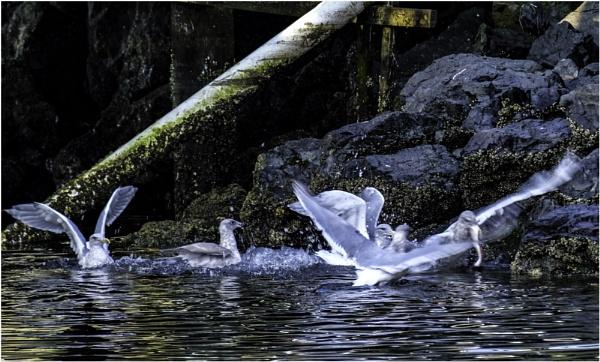 Fish Fighting by Daisymaye