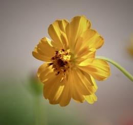 backlit flower