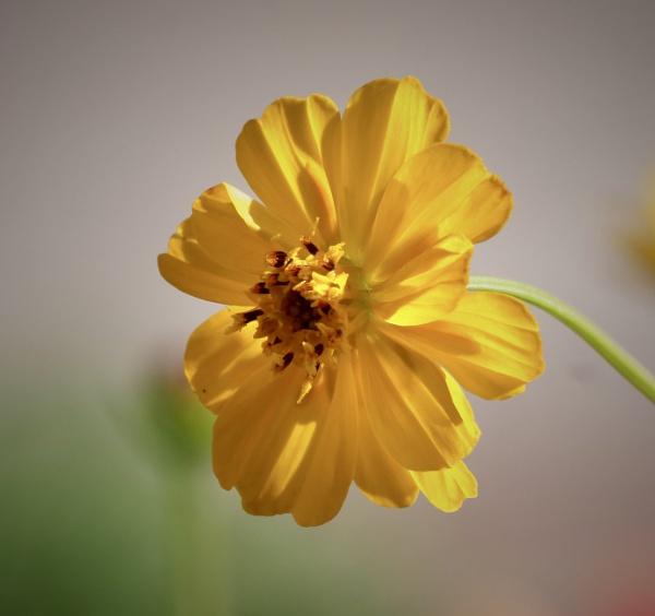 backlit flower by sparrowhawk