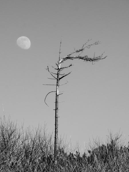 Avoiding the moon by digicammad