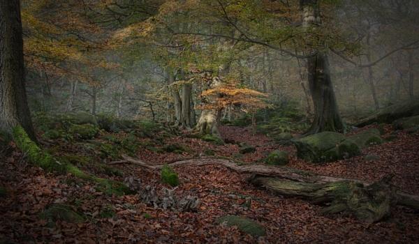 Autumnal Woodland by Gavin_Duxbury