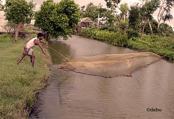 From_Kolkata # 118 Fishing by Cast net..3 by debu