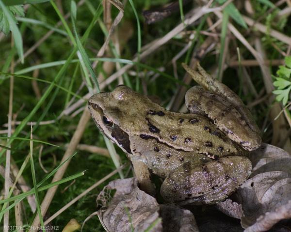 Frog by Alan_Baseley