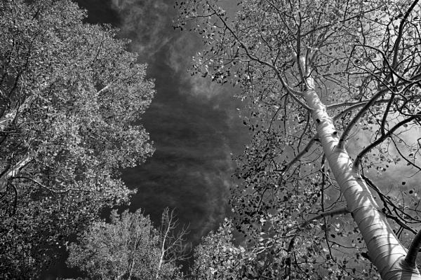 Autumn\'s reach by mlseawell