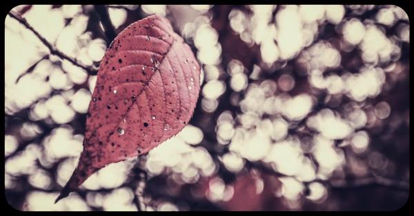 Autumn Leaf by Yogendra