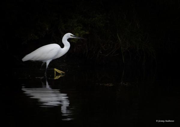 Little Egret by JonnyNI