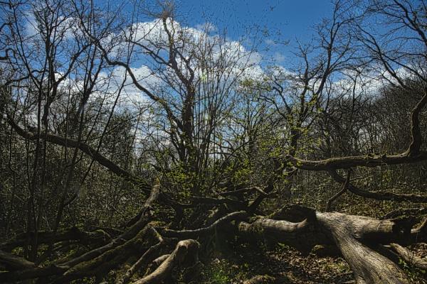 Fallen Trees by woodini254