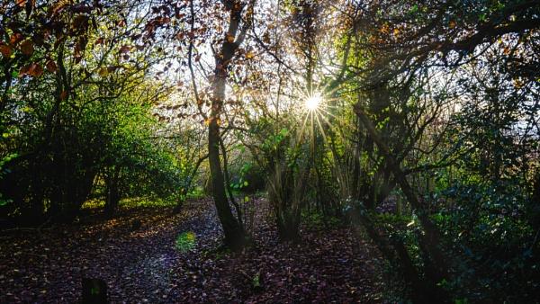 Autumn Sun by woodini254