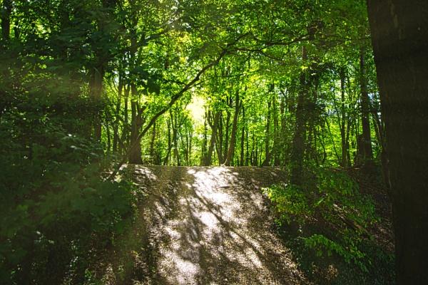 Woodland Sunburst by woodini254