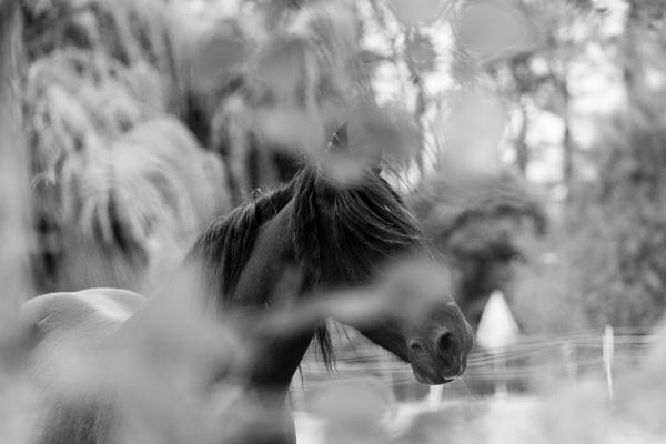 Horse behind the bush leaves by rninov