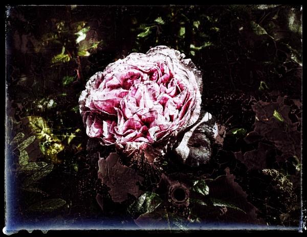Renaissance by Monochrome2004