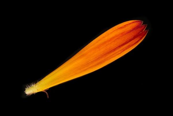 petal by alfpics
